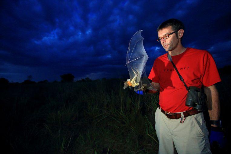 Martin Wikelski laat een gezenderde vleermuis los in Kasanka National Park, Zambia, waar de grootste vleermuizenkolonie ter wereld leeft. Beeld Christian Ziegler, Max Planck Instituut