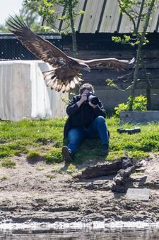 'Je kunt hier roofvogels fotograferen terwijl ze hun prooi uit de vijver vissen'