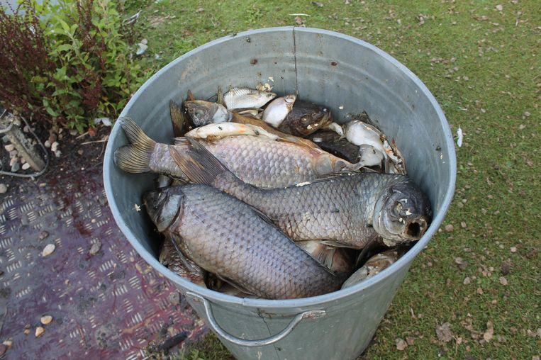 Een deel van de dode vissen werden al in vuilnisbakken gestoken.