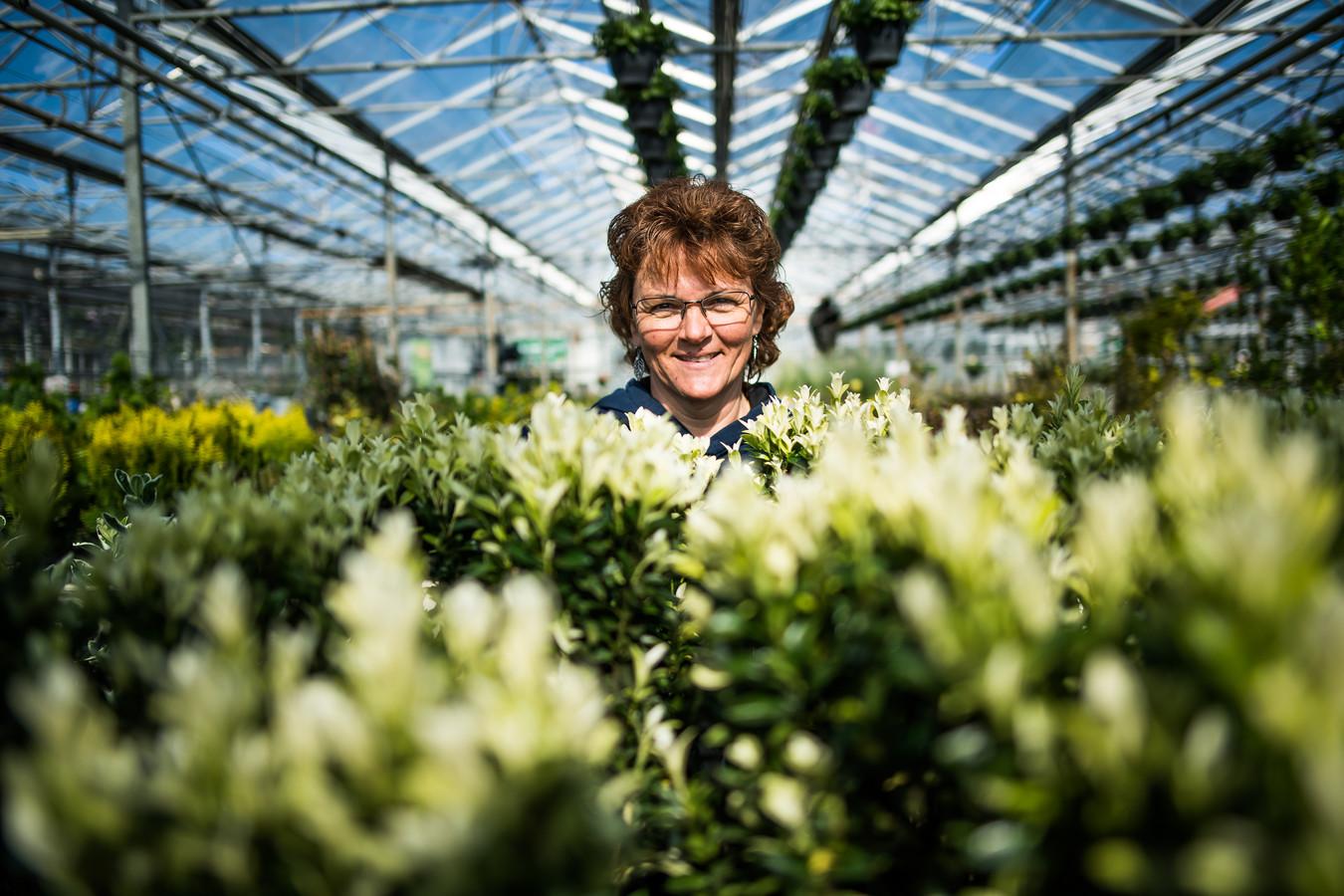 Anita Gerritsen van de gelijknamige kwekerij in Huissen laat vol trots zien welke alternatieven er voor de buxus zijn: de taxus, hulst en de ilex (Japanse hulst).