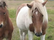 Groen licht voor vakantiepark paardenliefhebbers Dalem in Hapert