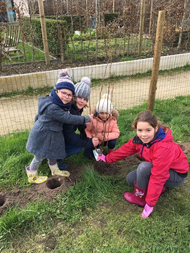 De leerlingen van Klavertje 3 hebben meer dan driehonderd bomen en struiken geplant in hun speelweide.