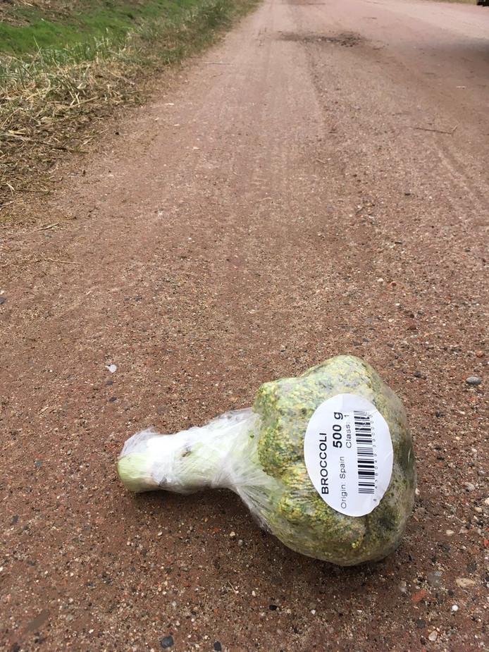 Spoor van broccoli in bos bij Bergen op Zoom.