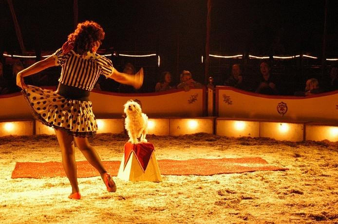 Mayka in actie met haar hondje tijdens een voorstelling van Circus Zanzara. foto PR