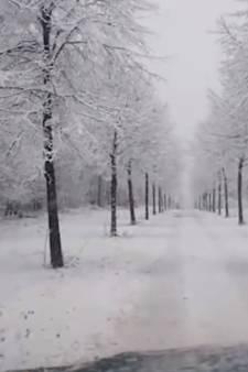 Boswachter Tim was precies op tijd om winter wonderland in het Groesbeeks bos vast te leggen