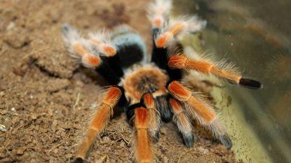 Duizenden levende spinnen, schorpioenen en andere exotische beestjes gestolen uit museum in VS