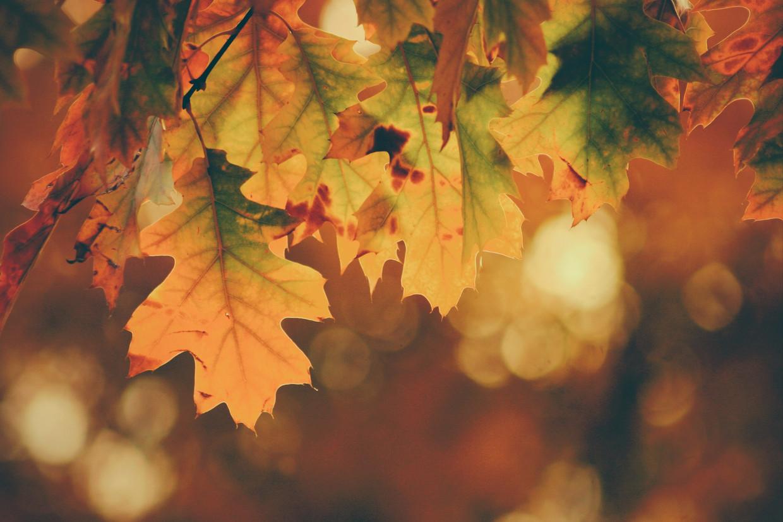 Begint de herfst te vroeg?