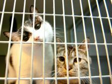 Eigen Westlands dierenopvangcentrum moet onnodig leed voorkomen