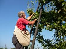 Appels en peren plukken als opstapje naar vaste baan
