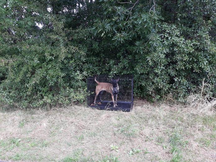 Op een carpoolplaats in Nieuwegein is zondag een Mechelse herder gevonden.