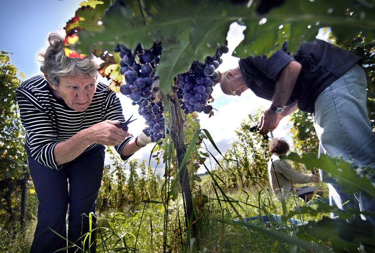 'Mijn wijn is een wijn voor doopplechtigheden, niet voor begrafenissen wijn is bedoeld om je het leven in te trekken.' Beeld Marcel van den Bergh