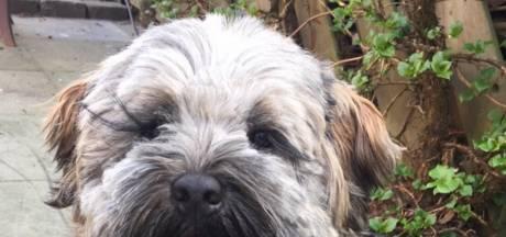 Aangifte tegen man die hondje Woezel uit Nijverdal fatale schop gaf