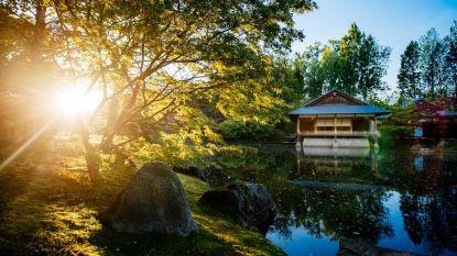 Docenten Hogeschool PXL houden hoofd koel in de Japanse Tuin