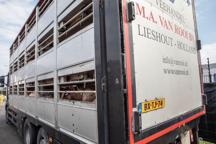 Varkenstransporten bij van Rooi Meat aan de Roggedijk in Helmond