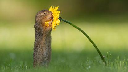 Soms moet je even stoppen om aan een bloem te ruiken: eekhoornfoto van Nederlandse visboer gaat de wereld rond