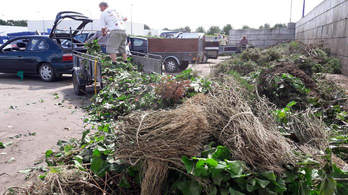 Op de milieustraat in Oss worden de troosteloze restanten van de buxusstruiken gedumpt.