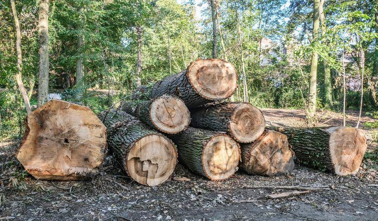 Volgens de stad is er zeker een boom te veel gekapt.
