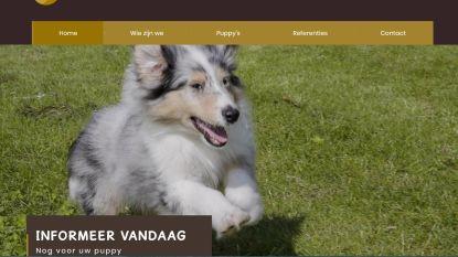 Nieuwe klachten tegen hondenfokker die na faillissement opnieuw begon