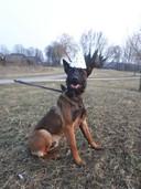 Politiehond Bouke is zondag 4 maart 1 jaar oud geworden!