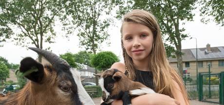 9-jarige dierenliefhebber uit Heesch organiseert Geitenwei Festijn