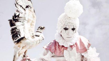 Dit Antwerpse duo verzamelt al 20 jaar opgezette dieren: hun creepy foto's zijn razend populair op Instagram