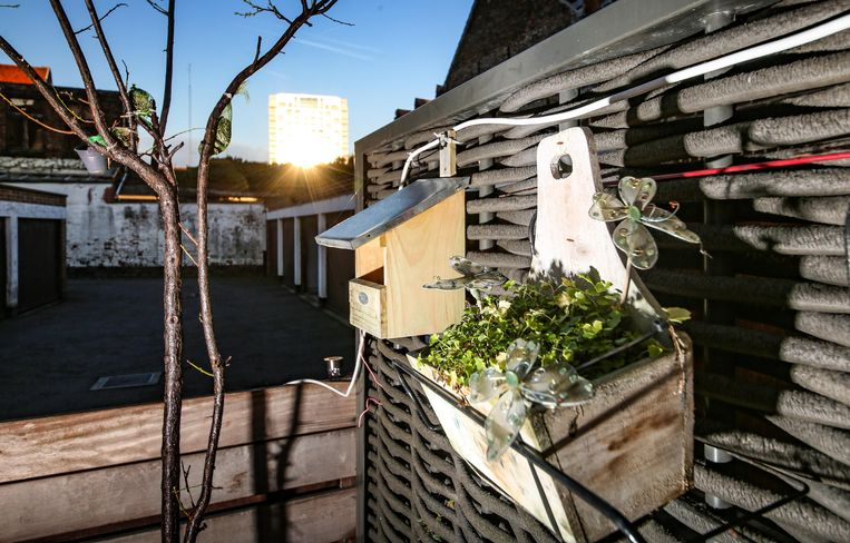 De kunstzon is wel goed nieuws voor het terras achteraan de woning.