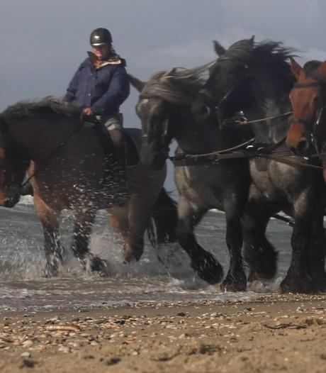 'Zeepaarden' te water bij de Maasvlakte