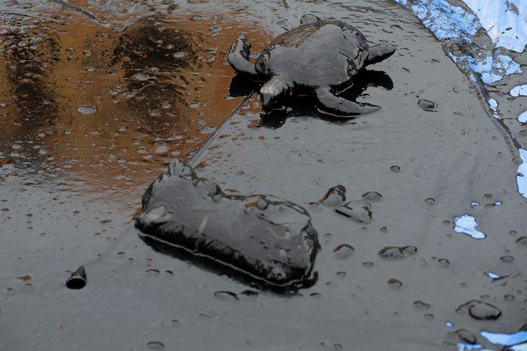 Een schildpad ligt in een plas olie.