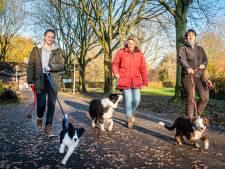 Alphen praat met hondenbezitters over veiliger Zegerslootgebied
