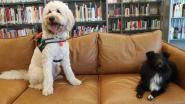 Van een fijn publiek gesproken: kinderen leren voorlezen dankzij honden