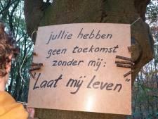 'Boomborden' als protest tegen woningen in het bos: 'Jullie hebben geen toekomst zonder mij'