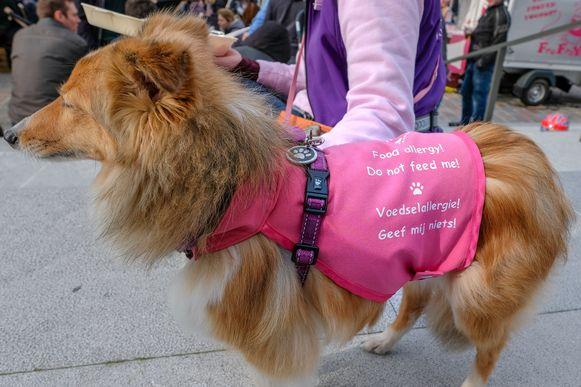 Een hondje met een voedselallergie kon enkel toekijken.