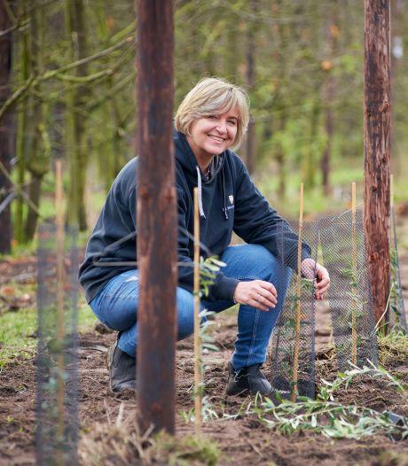 Olijfboomgaard in Loosbroek: inspelen op steeds warmere zomers