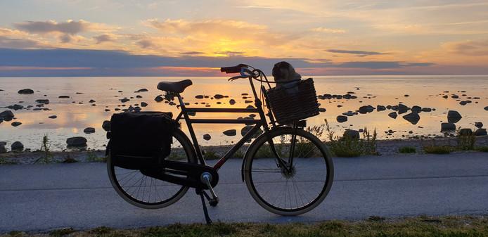 Bas Struijken uit Sliedrecht schoot dit plaatje in Visby, op het eiland Gotland in Zweden. Mopshond Ari heeft zijn eigen transportfiets!