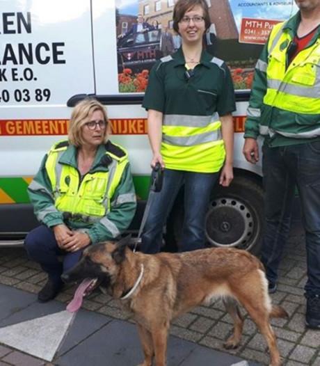 Ontsnapte 'politiehond' Cindy weer terecht