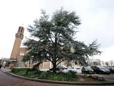 'Uitstel van executie' voor boom bij Hengelose stadhuis