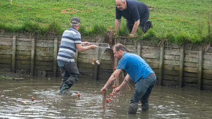 Vissen vijver Sint-Pieter verhuizen naar Terbiest