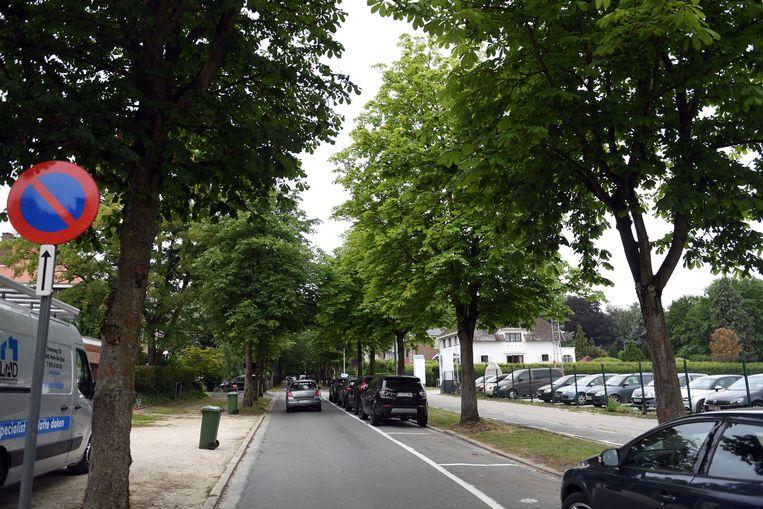 Over de geplande kap van 200 grote bomen in de Kardinaal Mercierlaan ontstond laatst nog een discussie. De stad Leuven wil zo weinig mogelijk bomen kappen in de toekomst.