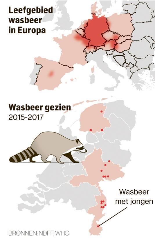Wasbeerpopulatie in Europa, BJD