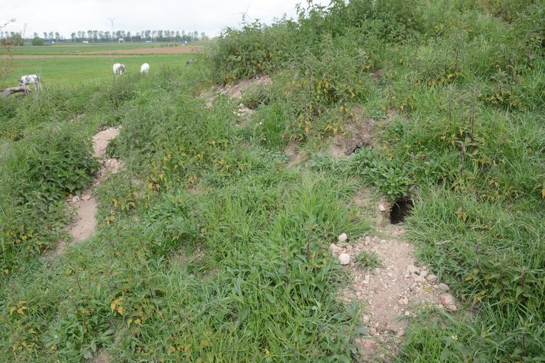 Bouwpuin wordt door de dieren naar buiten gegegraven.