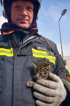 Alphense brandweer redt kitten uit boom