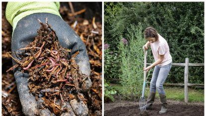 Je tuin wapenen tegen nog zo'n hete zomer? Onze tuinexperte legt uit hoe je je bodem 'boost'