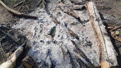 Dure boete voor jongeren die kampvuur maken in Hoeselt