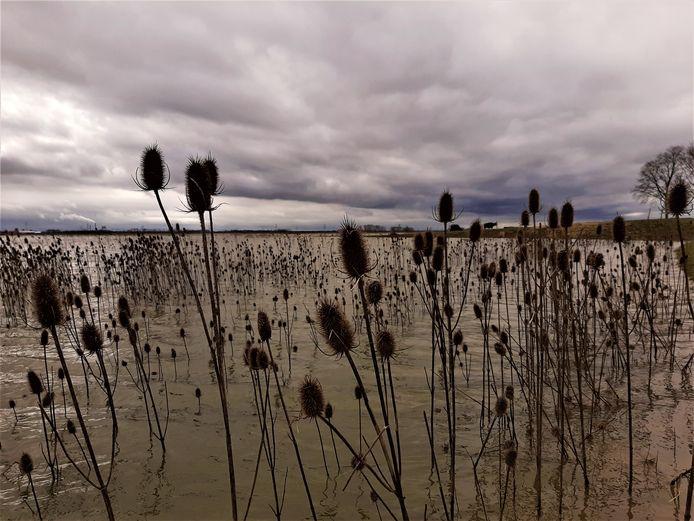 De grote watervlakten van de Biesbosch zijn erg belangrijk als rustplaats voor vogels.