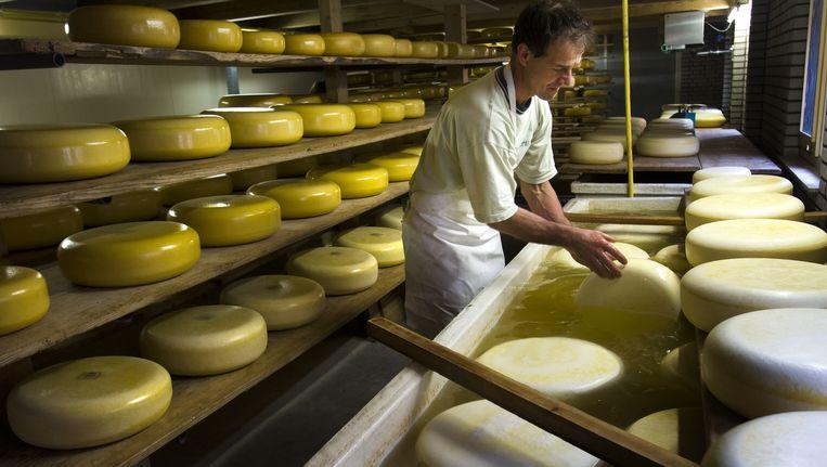 Archieffoto van de boerderij van familie Van Schie waar ze met de melk van 50 koeien dagelijks boerenkaas maken. Beeld anp