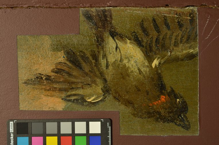 Een roofvogel in een erker van de koepelzaal van Trompenburgh. Beeld Chantal Dekker