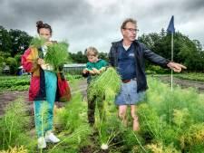 Deze families eten wat de tuin hen geeft: 'Kies een lekkere knol uit'