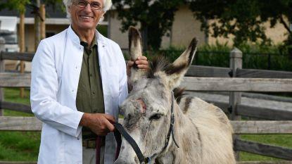 """Plastisch chirurg geeft mishandelde ezel nieuwe kop: """"De neus is groter, maar het principe is hetzelfde"""""""