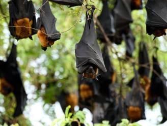 """WWF-rapport: """"Zelfs coronacrisis kan gevolg zijn van verlies aan biodiversiteit"""""""