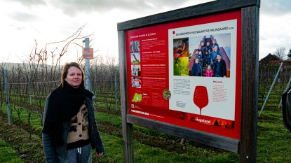 "Word sommelier in eigen streek: ""Houwaartse Wijngaard"" zoekt cursisten"